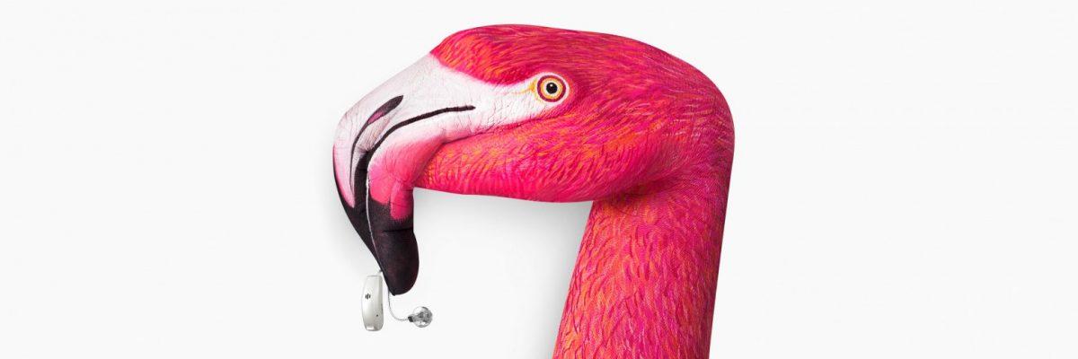 Pure-10-Nx_keyvisual_flamingo_3840x1280px_grey-1560x520